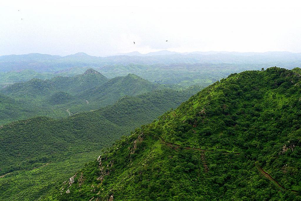 Delhi Ridge protects the citizens from heat, dust and other air pollutants. Credit: Wikimedia Commons
