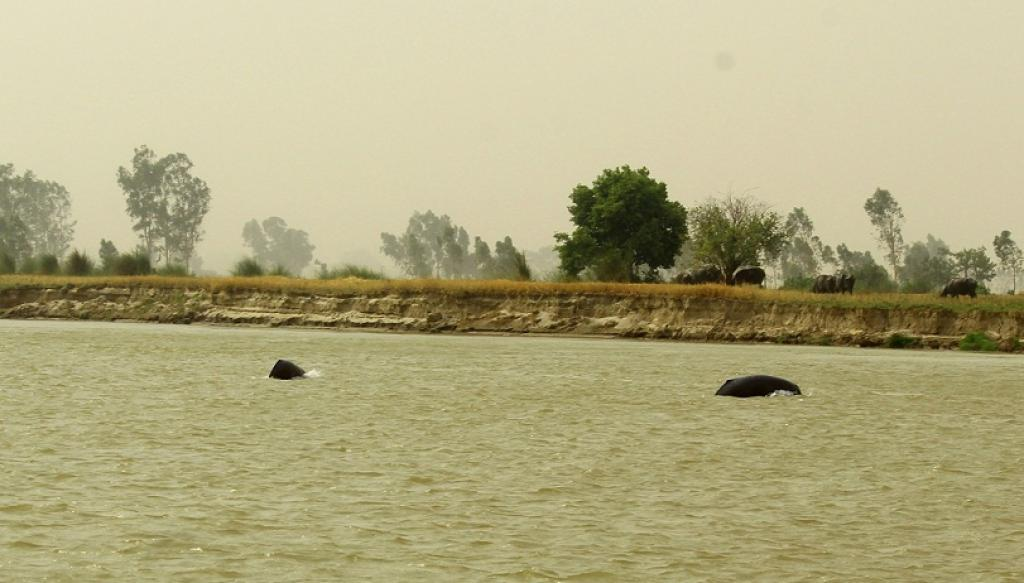 Credit: WWF-India
