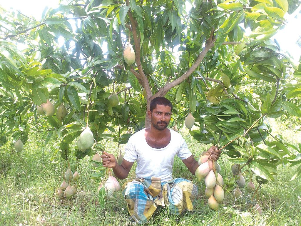A farmer shows the totapuri mango variety in his orchard in Chittoor (Courtesy: Project Unnati / twitter)