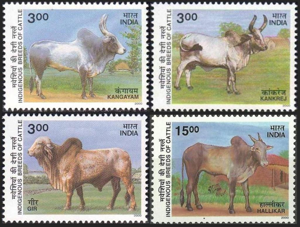 A stamp showing indigenous cattle breeds of India     Credit: Theodore Baskaran