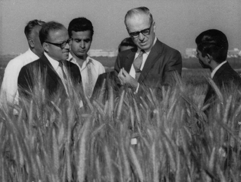 Norman Borlaug and M S Swaminthan in a wheat field in North India in March 1964         Credit: M S Swaminathan/Twitter