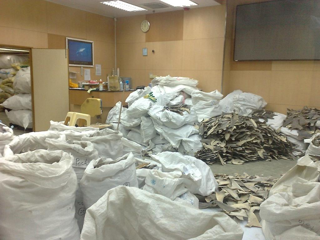 A warehouse filled with shark fins in Hong Kong        Credit: Wikimedia Commons