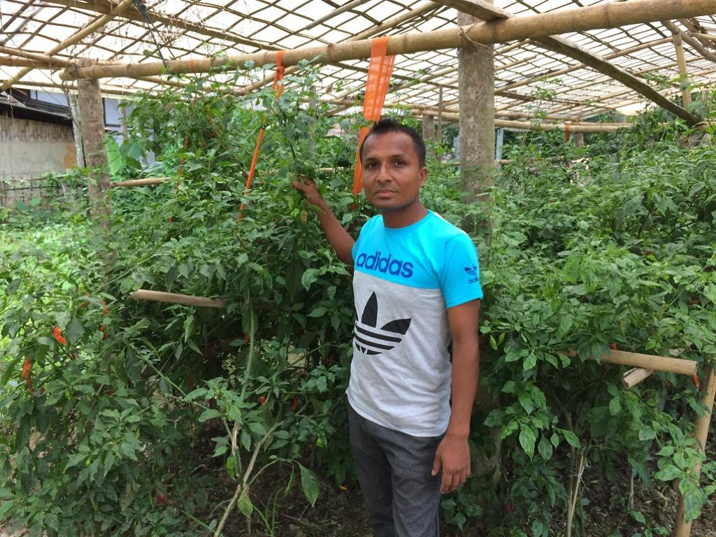 Jadhav Dutta in his chilli farm. Credit: Azera Parveen Rahman