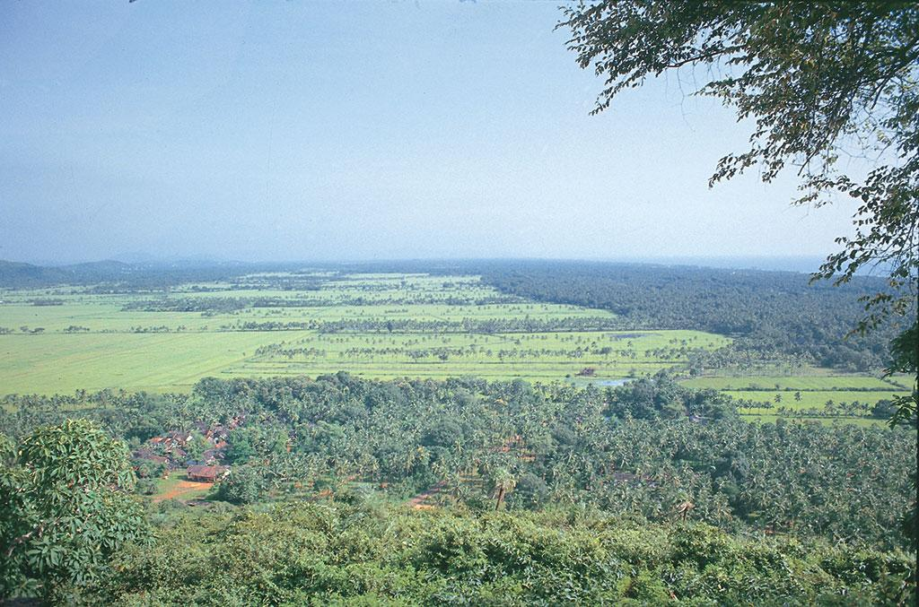 गोवा के खजाना खेत राज्य की पारिस्थितिकी में महत्वपूर्ण भूमि निभाते हैं। इनका क्षेत्रफल 18,000 हेक्टेयर से ज्यादा है।