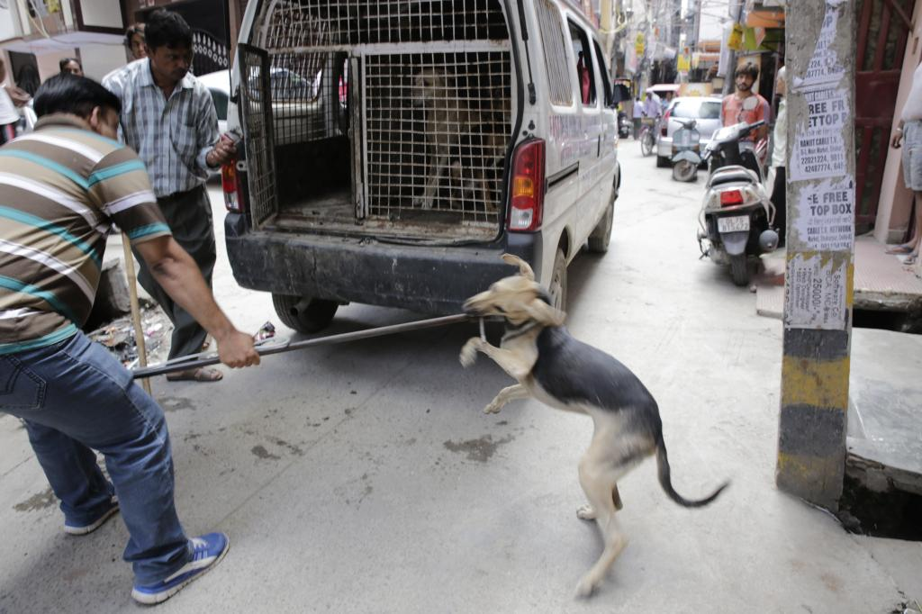 Dog bites in India