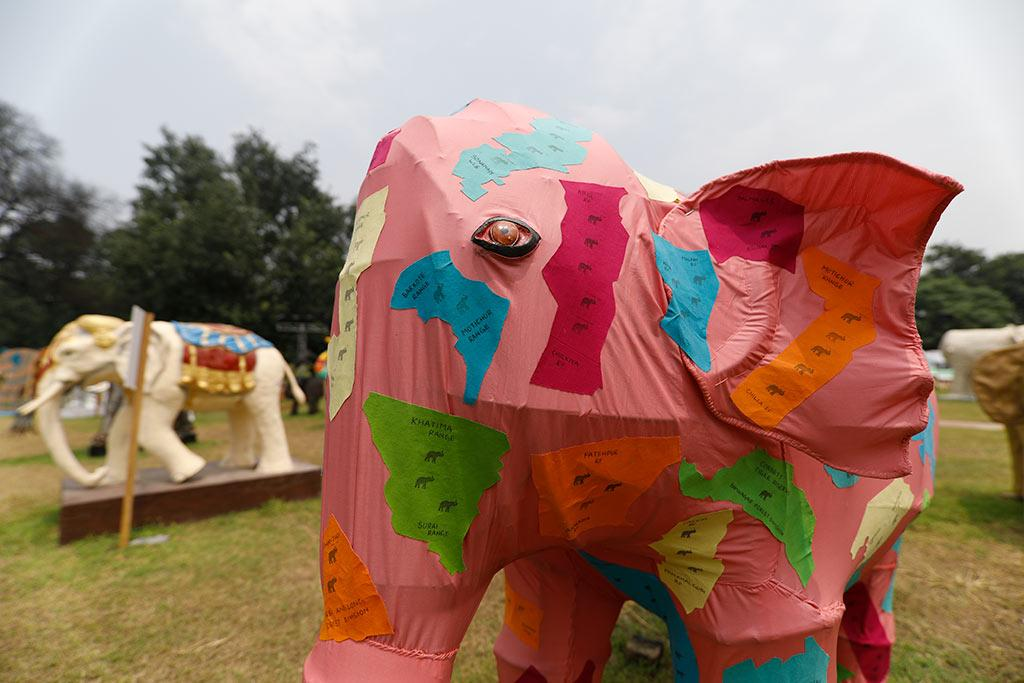 "This is an art installation showing the various elephant habitats in India. ""The current range of the elephant in India is just 110,000 sq km, which is very small,"" says wildlife historian Mahesh Rangarajan."