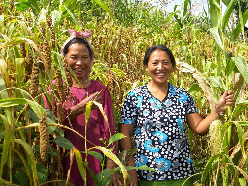 Thanks to the intervention of the North East Network-Nagaland, a women's rights organisation, millets have been revived in Chizami village of Phek district of Nagaland