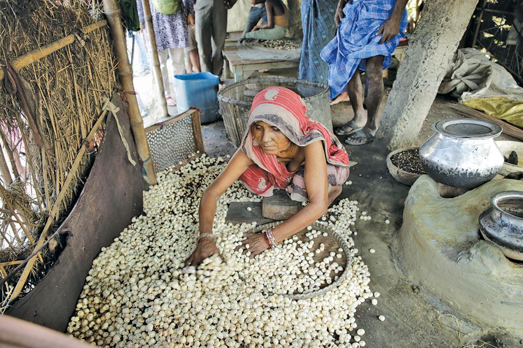राज्य के दलदली क्षेत्र की मखाना एक अहम उपज है। मखाना मिथिलांचल, कोसी और सीमांचल के आठ जिलों में उगाया जाता है। राज्य के कुल मखाना उत्पादन का 90 फीसदी यह क्षेत्र उपजाता है