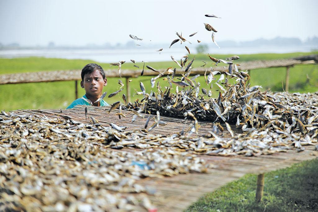 बिहार मछली की मांग 6.42 लाख मीट्रिक टन से अधिक है, 2017-18 में 5.35 लाख मीट्रिक टन मछली का उत्पादन किया। बिहार से मछली की प्रति व्यक्ति खपत 7.7 किलोग्राम है