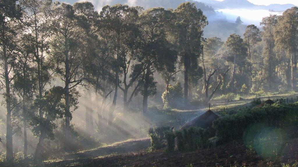 The Embobut Forest, where most Sengwer live       Credit: Yator Kiptum
