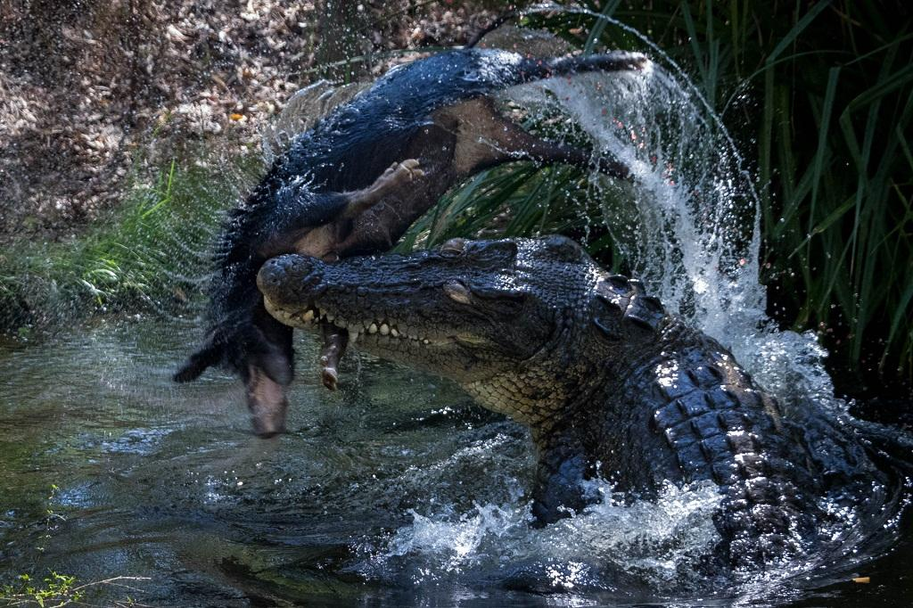Human-Crocodile Conflict