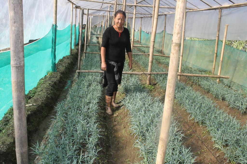 Greenhouses are needed to grow produce that does not respond to cold weather. Credit: Nita Narash