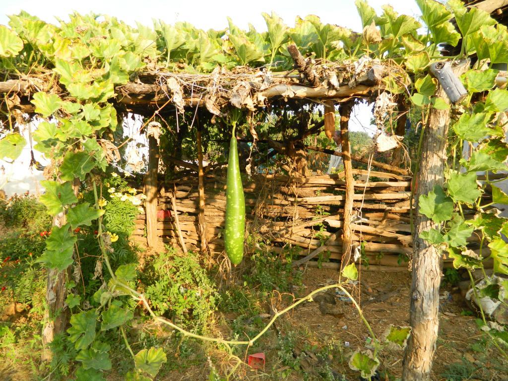 लगभग शून्य लागत वाले कुपोषण प्रबंधन के इस मॉडल में गांव के लोग अपने घरों के आस-पास खाली पड़ी जमीनों पर सब्जियां एवं फल उगाते हैं और स्वेच्छा से उसमें से कुछ गांव की आंगनवाड़ियों में दे जाते हैं।