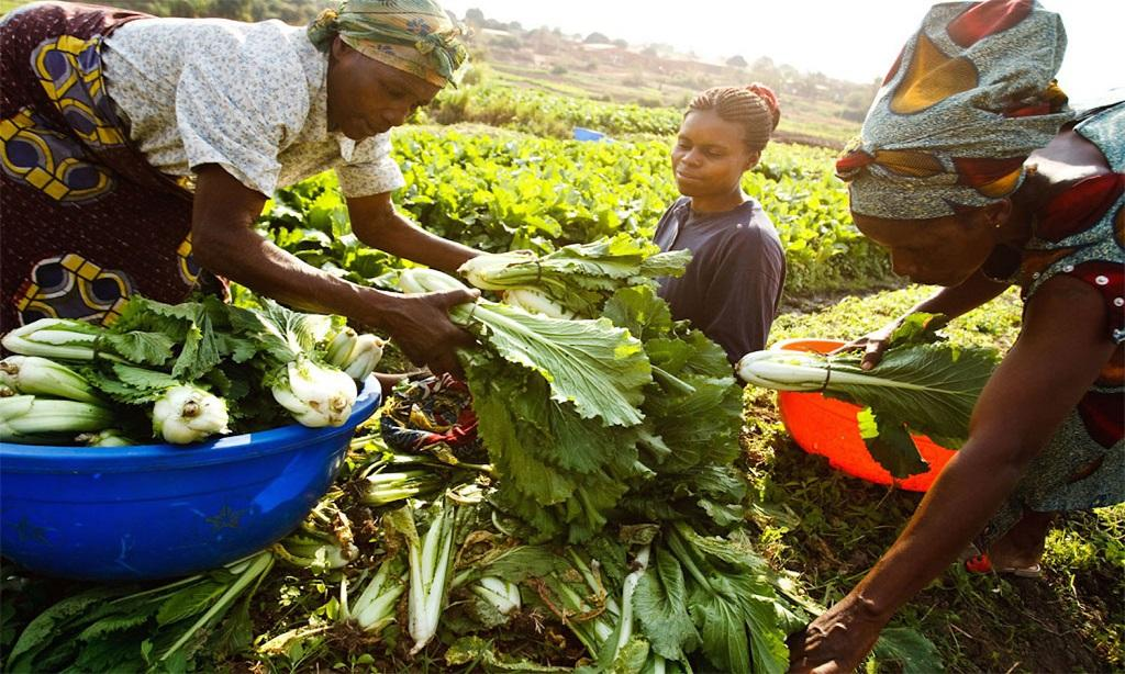 Africa women farmers