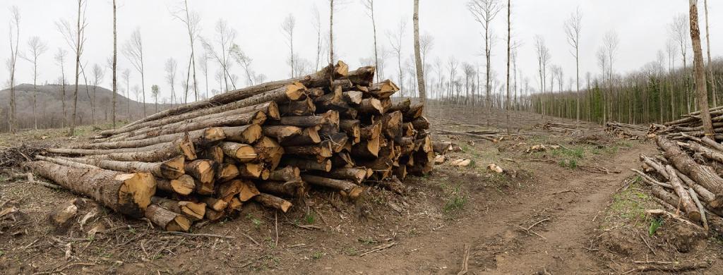 Deforestation and forest degradation