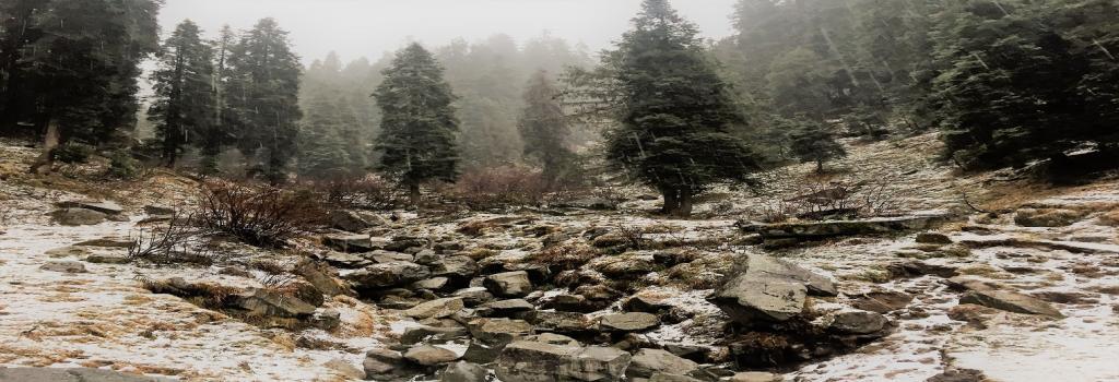 Snowfall in Himachal Pradesh