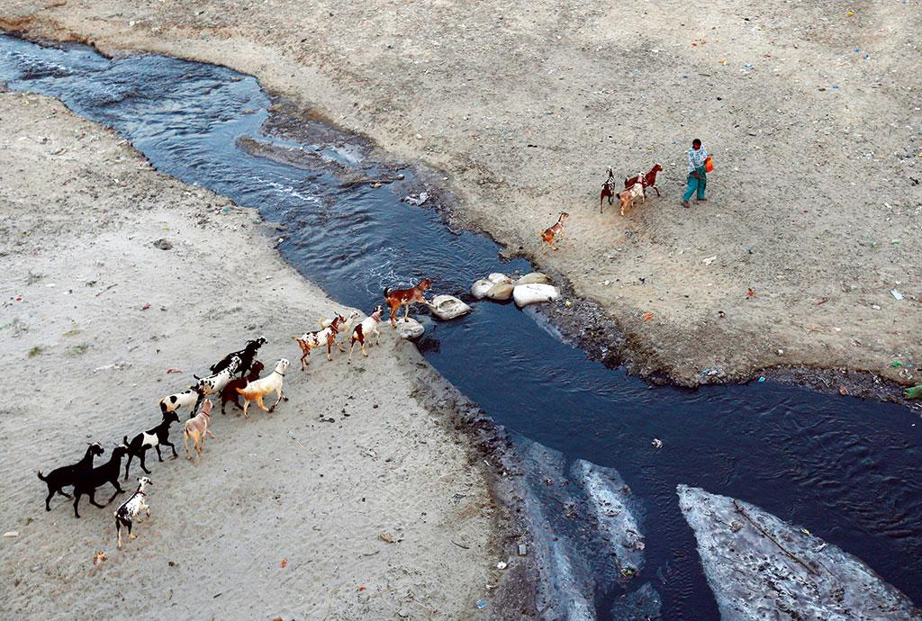 A woman herds her  goats through a drain flowing into the Ganga in Kanpur