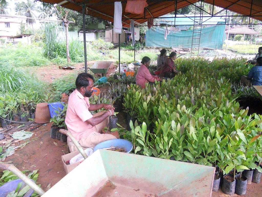 'Cashew Board will help procure raw cashew nut directly'