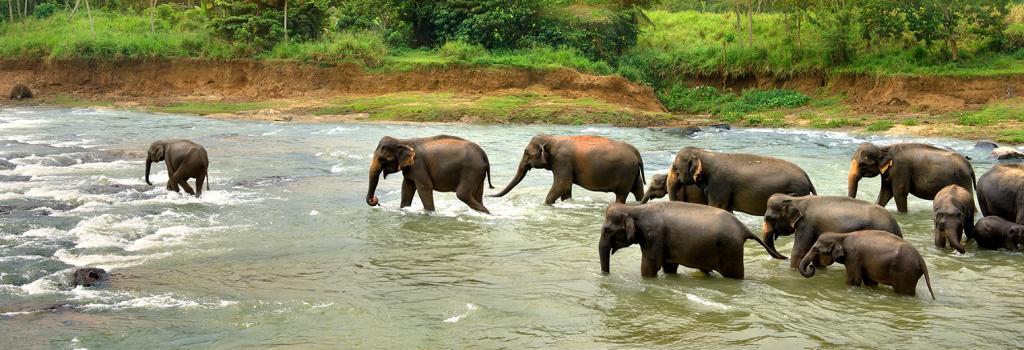 odisha lost 179 elephants to electrocution since 2000