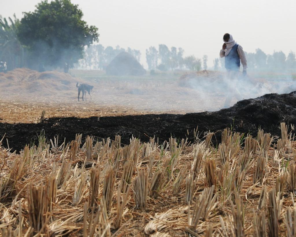 Representational Photo of stubble burning     Credit: Vikas Choudhary