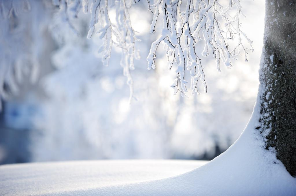 During the active growth period, the sensitive tissues of plants are vulnerable to frosts. Credit: Getty Images