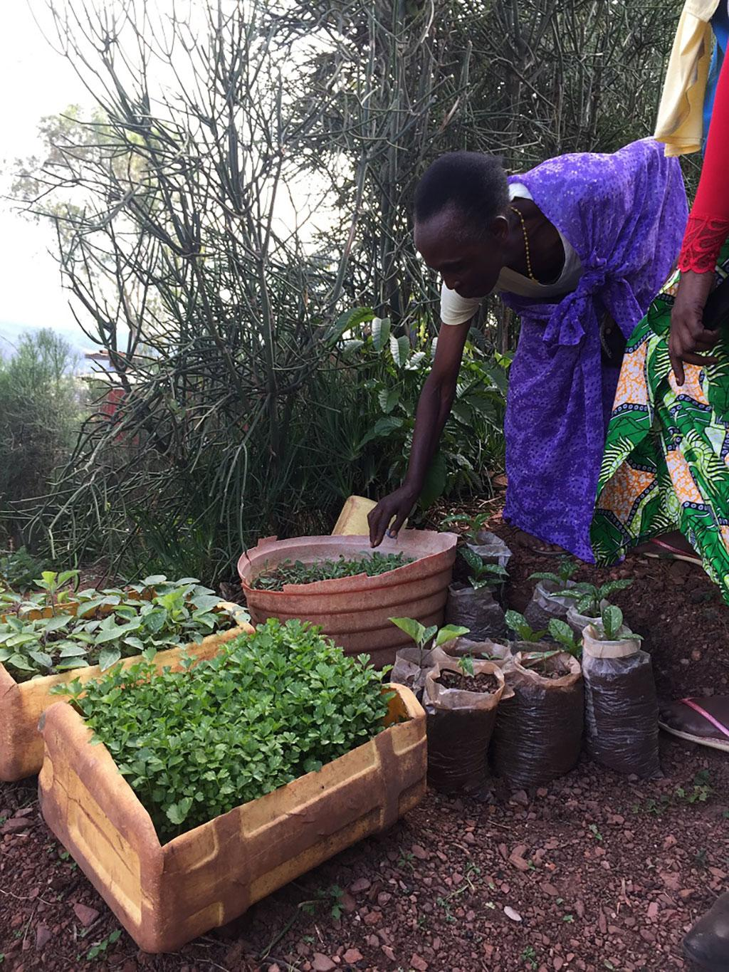 The responsibility of the kitchen garden is with the women who are assisted by the Farmer Field School.
