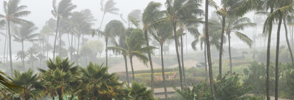 The IMD predicts that the cyclone will gain further strength to transform into a severe cyclone by the evening of December 15. Credit: Getty Images