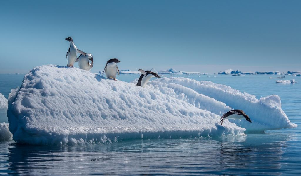 Penguins on an iceberg in Antarctica. Credit: Getty Images