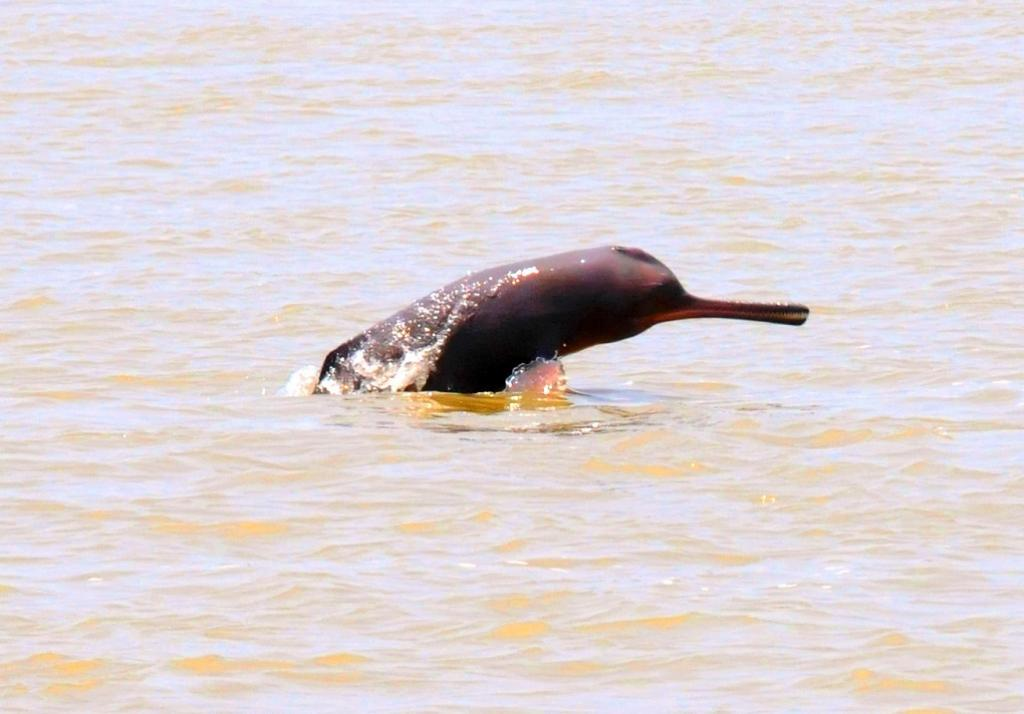 Bihar wildlife