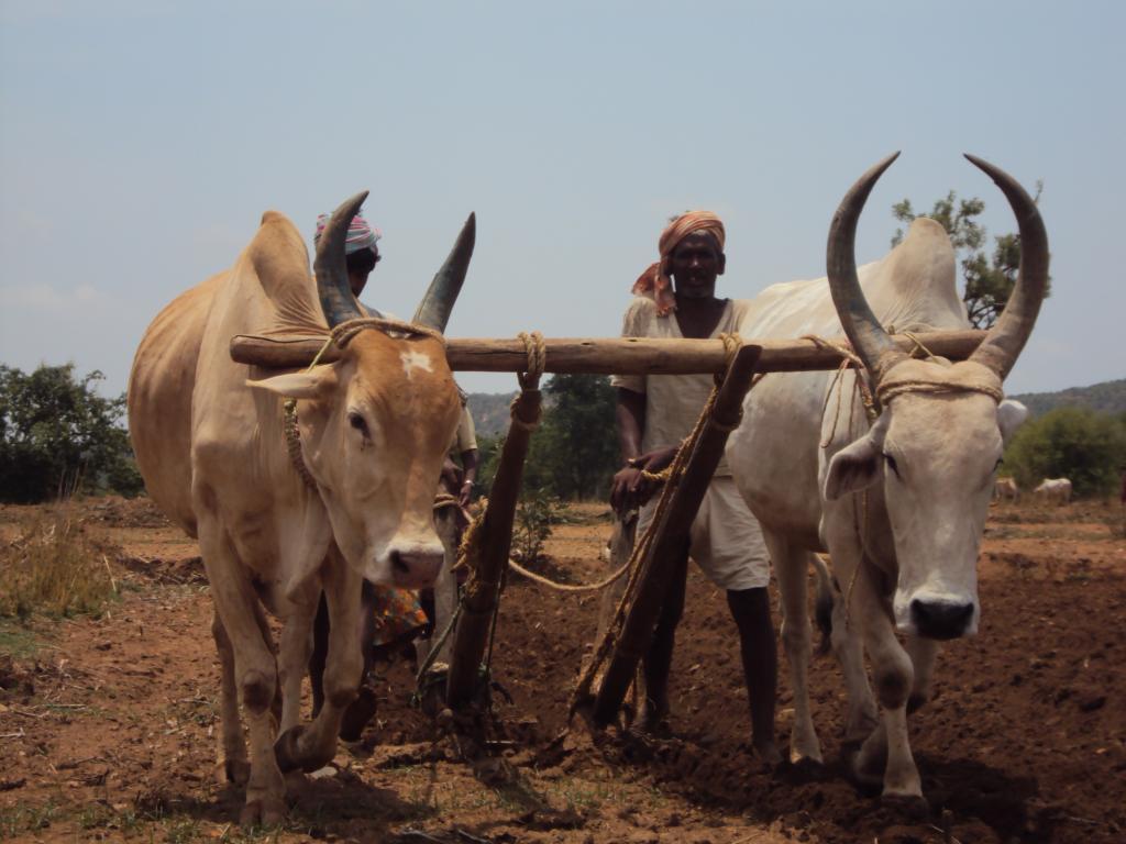 भारत में छोटे और सीमांत किसानों के पास दो हेक्टेयर से कम भूमि है। Credit: Moyna/CSE