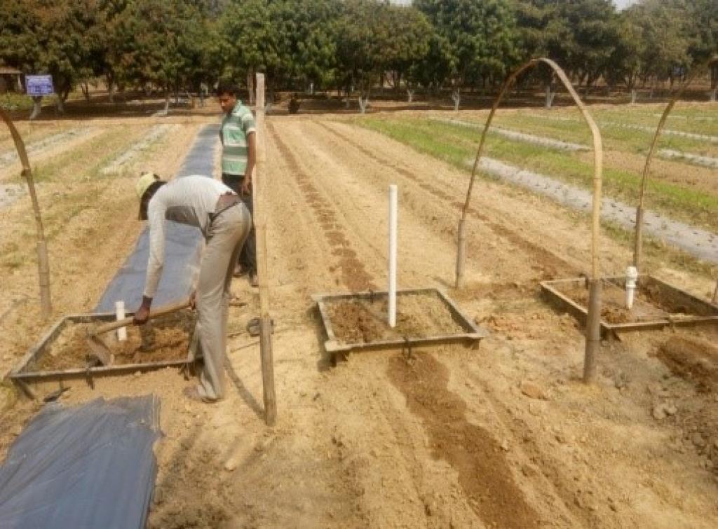 बुआई के पूर्व खेत को तैयार किया जा रहा है