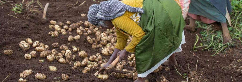 Potato prices