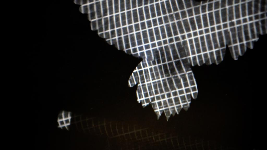 Researchers in the Lentink lab developed a new way to record wing shape during bird flight in 3D. This is a clip from a video of a parrotlet in flight. When the bird flies through this specially patterned light, its body acts like a projector screen. An algorithm then matches the deformed pattern on the bird to the original projected pattern to produce a detailed 3D reconstruction of how the bird moved through the light field. Image credit: Marc Deetjen