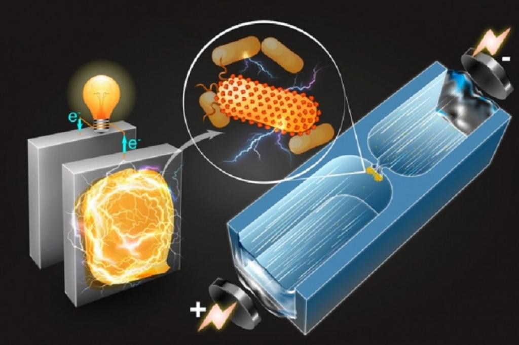 A diagram describing how microfluidic technique sorts bacteria based on their capability to generate electricity. Image: Qianru Wang/MIT