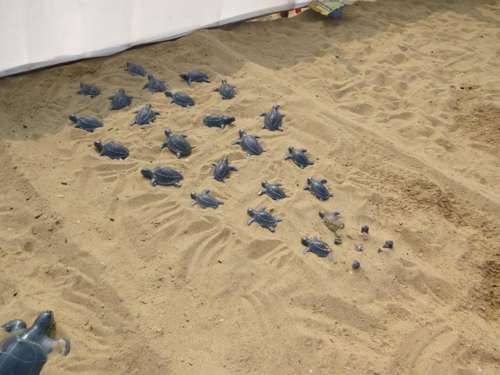 Baby turtles at the festival at Puri Beach. Photo: Ashis Senapati