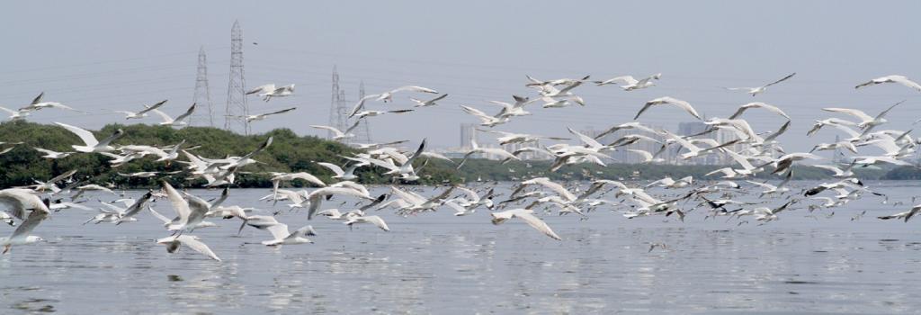 Mumbai Wildlife