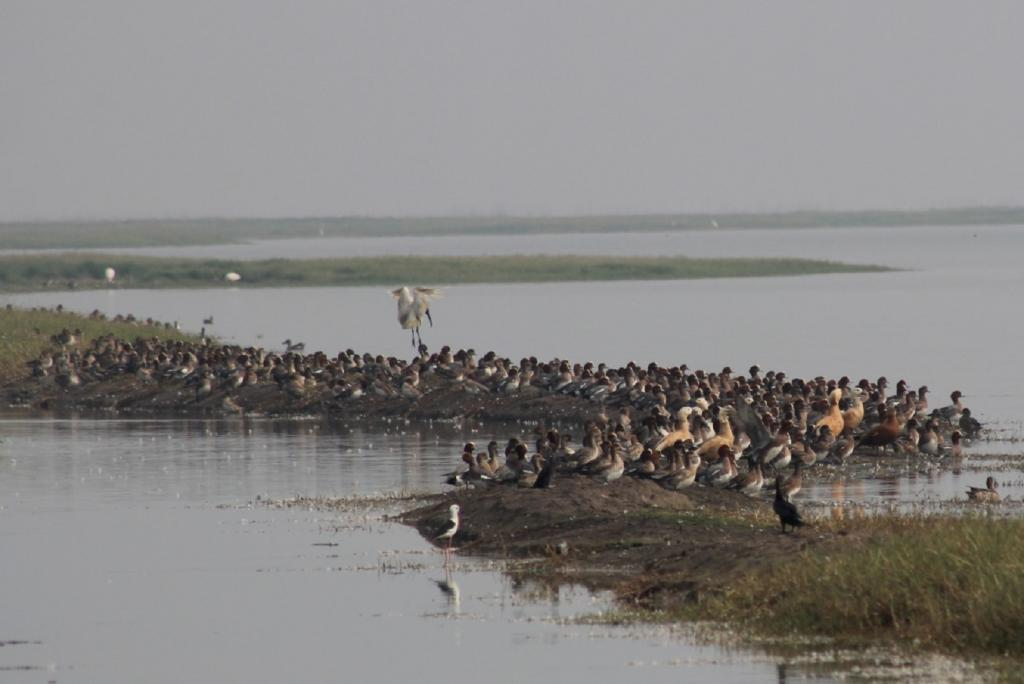 Chilika Lake, Asia's largest lagoon in Odisha known as a birdwatchers' paradise celebrated the second edition of  National Chilika Bird Festival, January 27-28, 2019