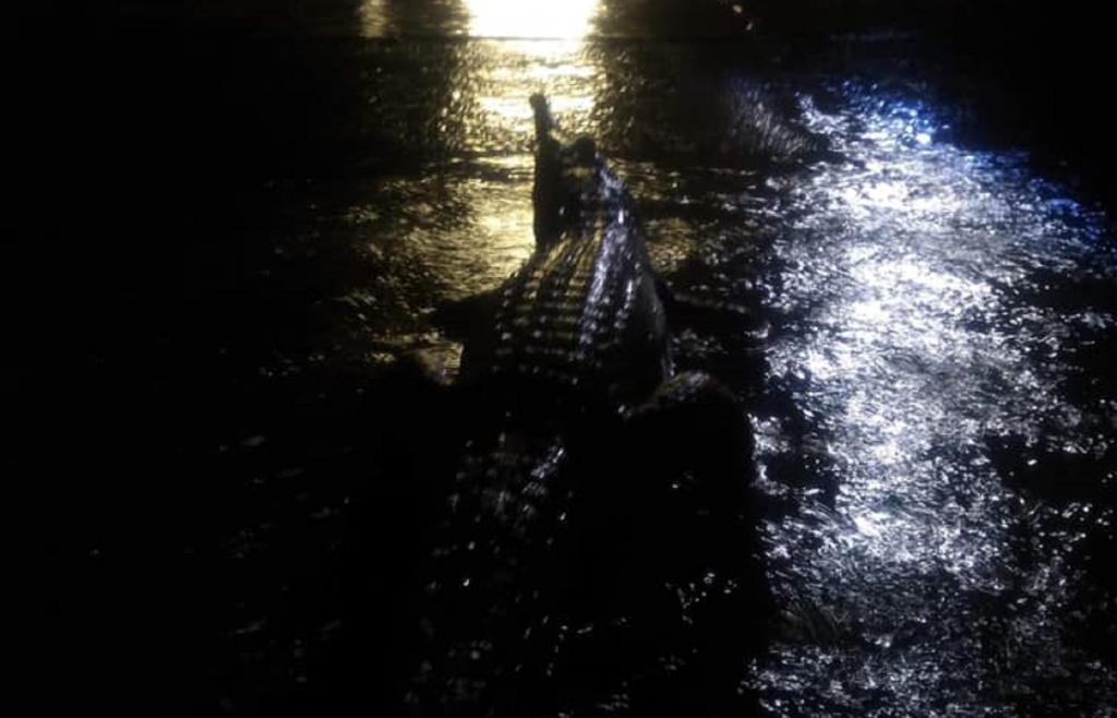 Amid the flood chaos, crocodiles and snakes have been spotted at various places being swept along with the water. Photo: Erin Hahn/Facebook