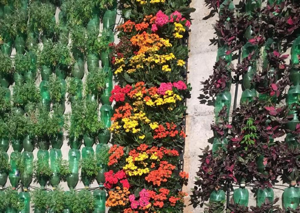 In a span of 16 months, the team set up more than 325,000 plants of more than 80 different varieties. Photo: Rohit Mehra