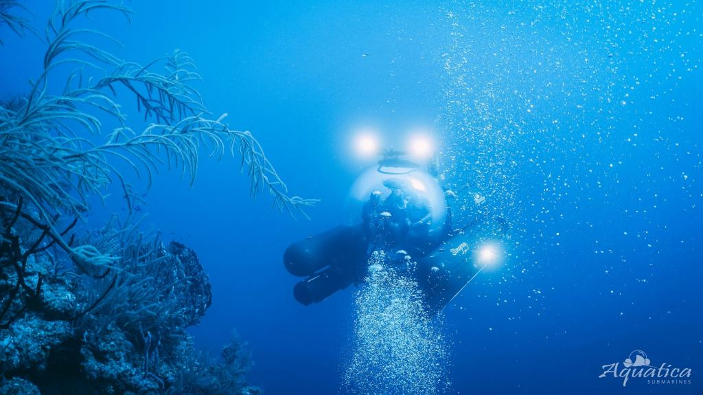The team took more than 20 dives into the 'Hole', once made famous by Cousteau's grandfather Jacques-yves. It explored the marinescape and captured extensive images and videos