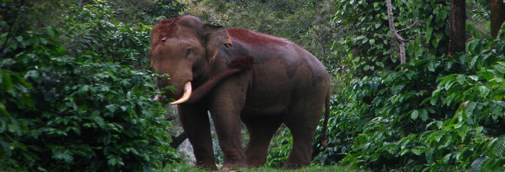 Human-elephant conflict