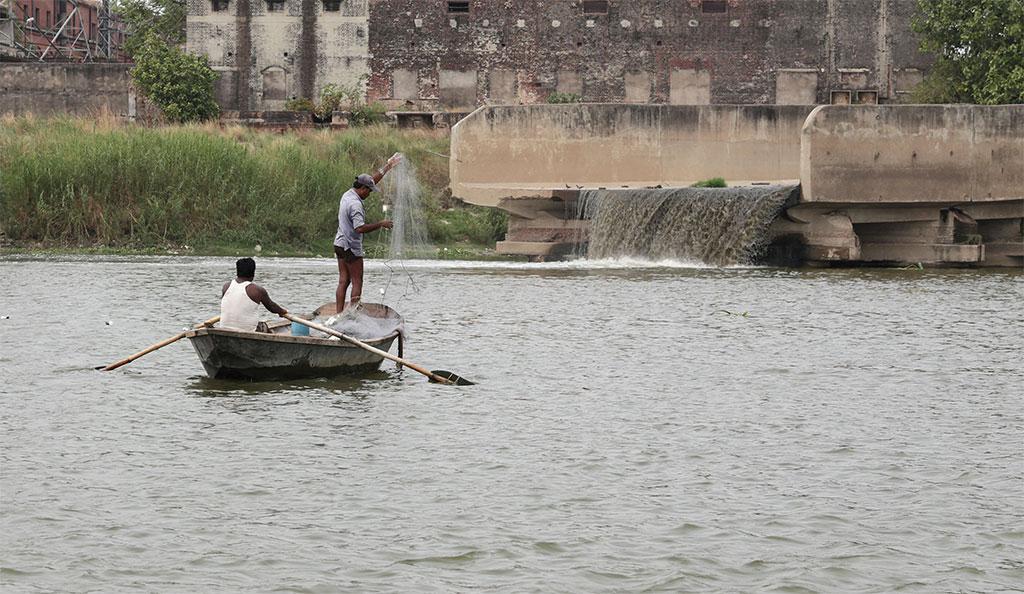 गंगा नदी में औद्योगिक प्रदूषण मछलियों को खत्म कर रहा है