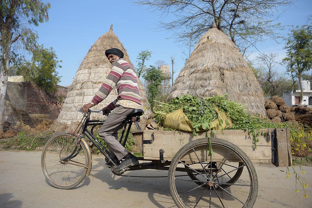 65 साल जय सिंह के पास पहले कोई जमीन नहीं थी लेकिन अब वह साढ़े तीन बीघा सामुदायिक जमीन पर खेती करते हैं। इस संघर्ष में वह दो महीने जेल में गुजार चुके हैं