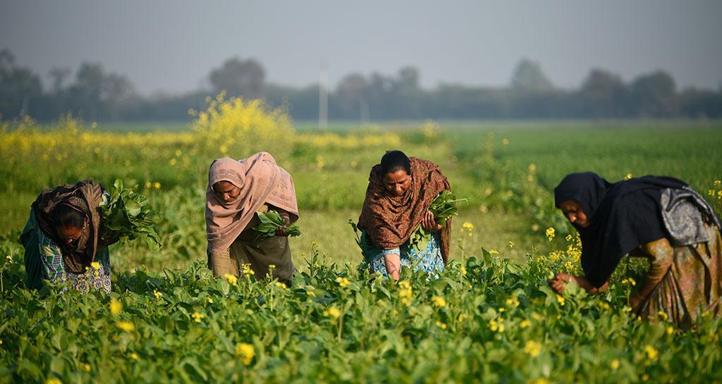 बालदकलां गांव में लंबे संघर्ष के बाद मिली सामुदायिक जमीन पर खेती करती महिलाएं