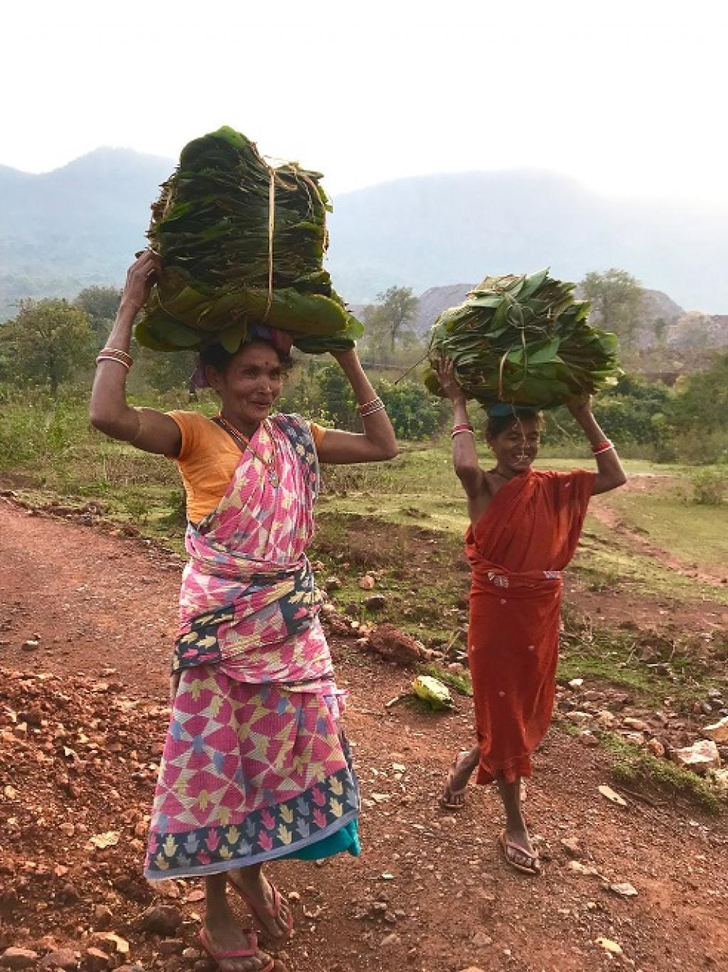 Many people in Keonjhar and Sundargarh districts depend on forests for their livelihood and gather minor forest produce such as mahula, kusum knots, tamarind, sal leaf and mushroom. Photo: Chinmayi Shalya