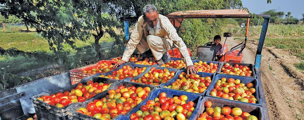 India's biggest tomato district surrenders to cheap Chinese pulp