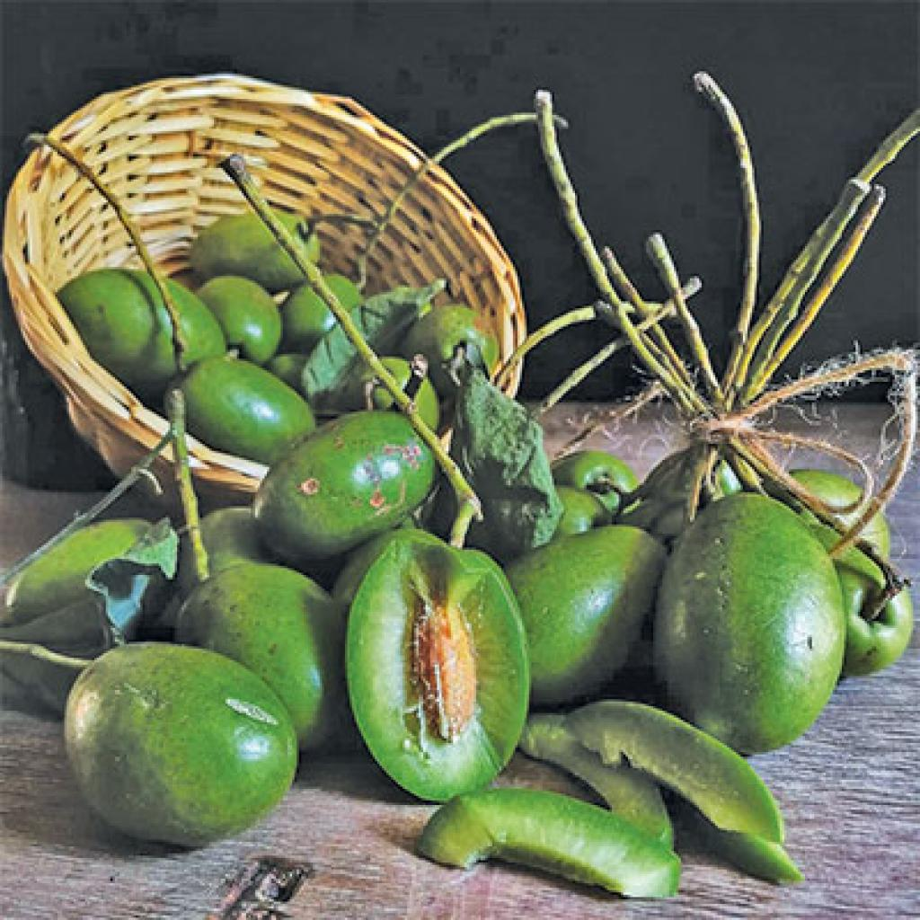 Jalpai is not cultivated as an orchard crop, but more as a backyard crop