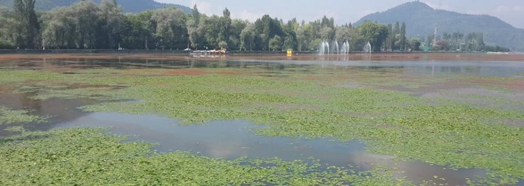 Dal Lake has shrunk 36 per cent in the last 37 years. Photo: Riyaz Wani