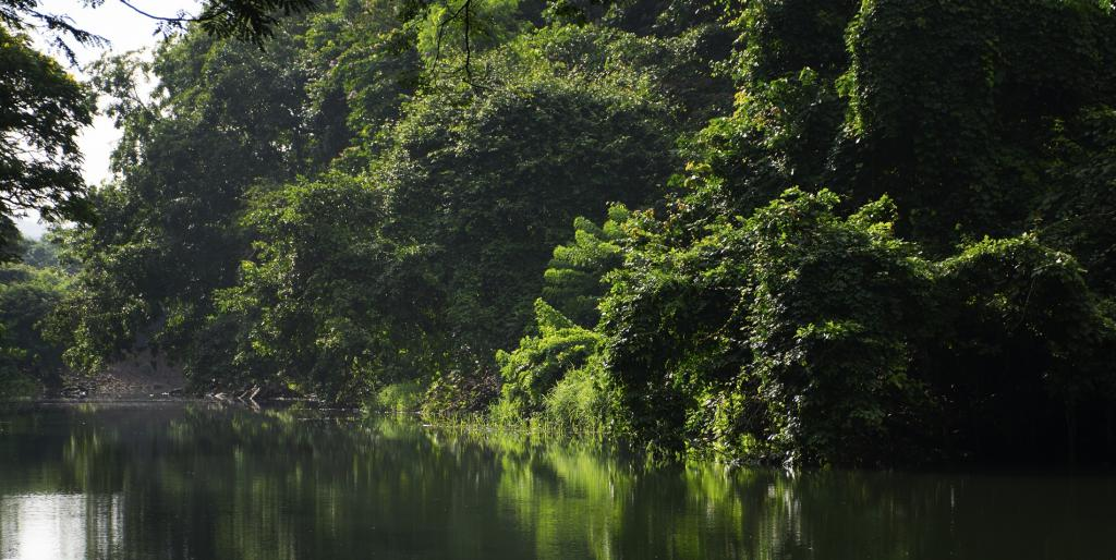 Forests along the Mithi river in Mumbai. Photo: Getty Images