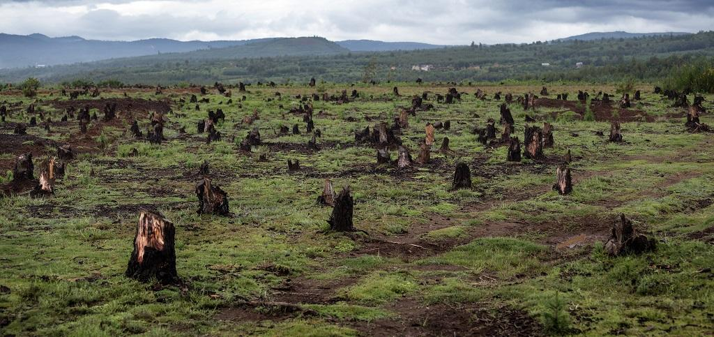 Biodiversity loss less in lands owned by indigenous communities: IPBES report
